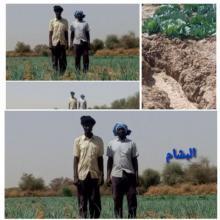 المزارع أمدو ولد ايميجن رفقة زميله في المزرعة يب ولد أمم داخل مزرعتهم  ( البشام)